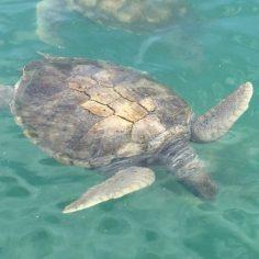 Cayman Island-web (10)