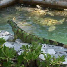 Cayman Island-web (9)